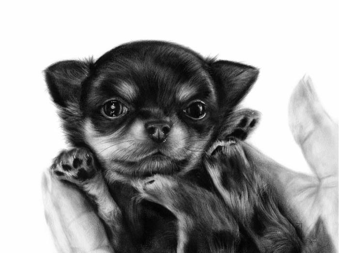 Arta realistica: Lumea animala, in picturi superbe - Poza 3