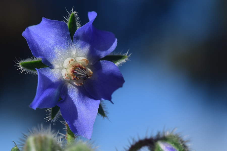 Cele mai frumoase flori din lume, intr-un pictorial de exceptie - Poza 15