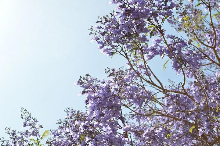 Splendoarea copacilor infloriti in poze superbe - Poza 18