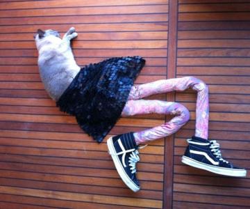 Gucci, pisica in colanti!