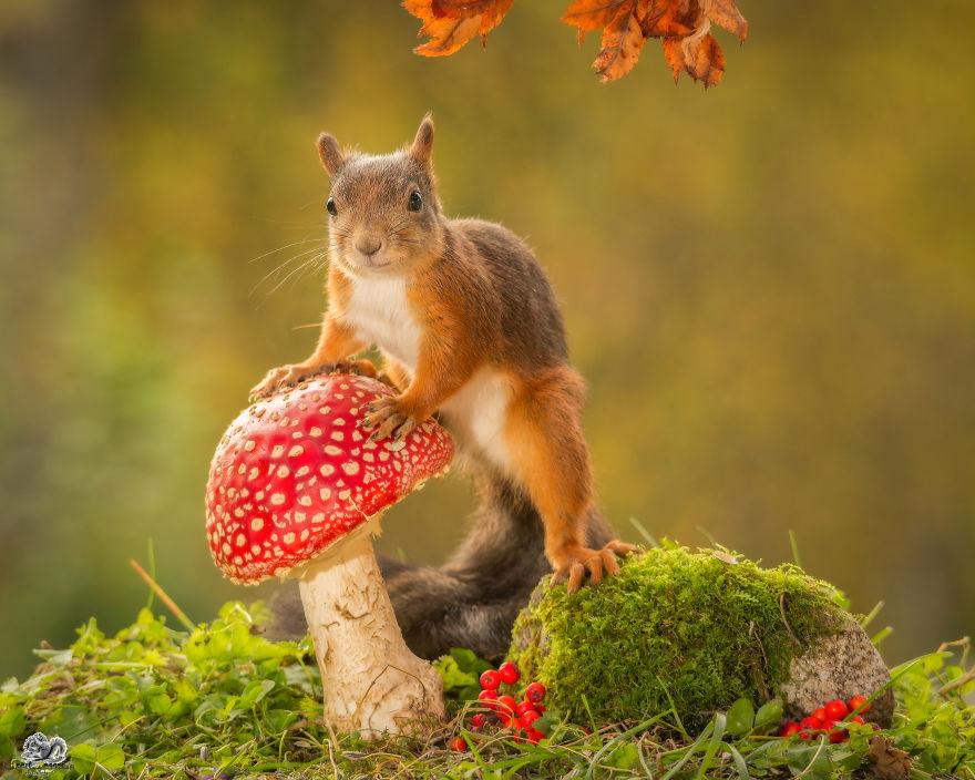 Frumoasa poveste cu veverite roscate, intr-un pictorial adorabil - Poza 18