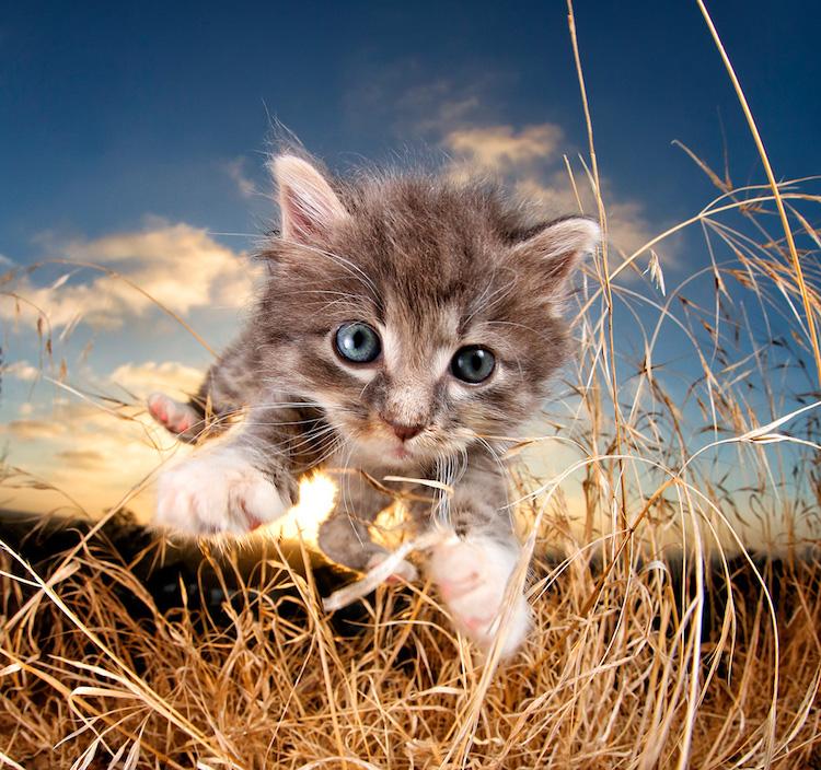 Pisicute adorabile surprinse in aer - Poza 4