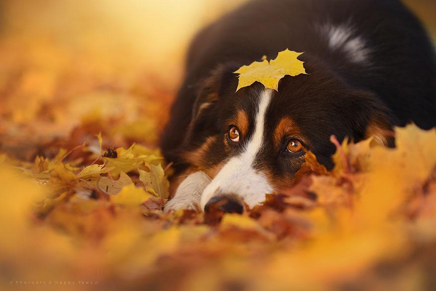 Portrete autumnale de suflet, de Anne Geier - Poza 7