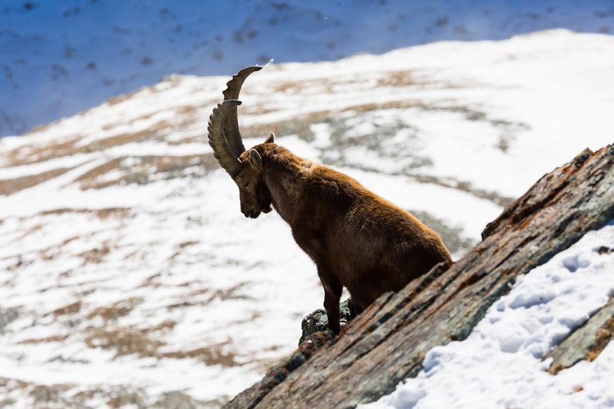 Maretia Alpilor pe timp de iarna - Poza 4