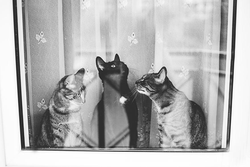 Pisici la fereastra, in poze alb-negru - Poza 2