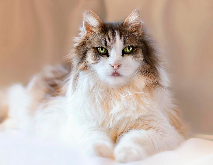 10+ Pisici superbe, in poze de colectie - Poza 16