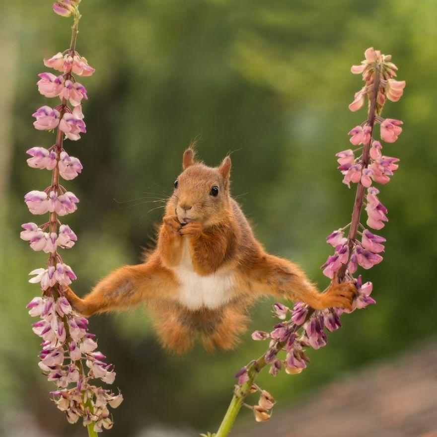 Comedy Wildlife Photography: Cele mai amuzante poze din salbaticie - Poza 4