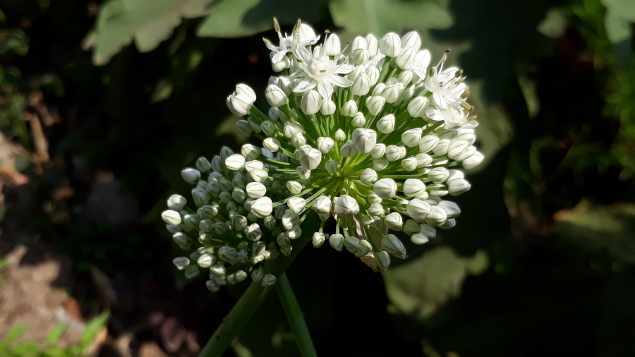 Cele mai frumoase flori din lume, intr-un pictorial de exceptie - Poza 12