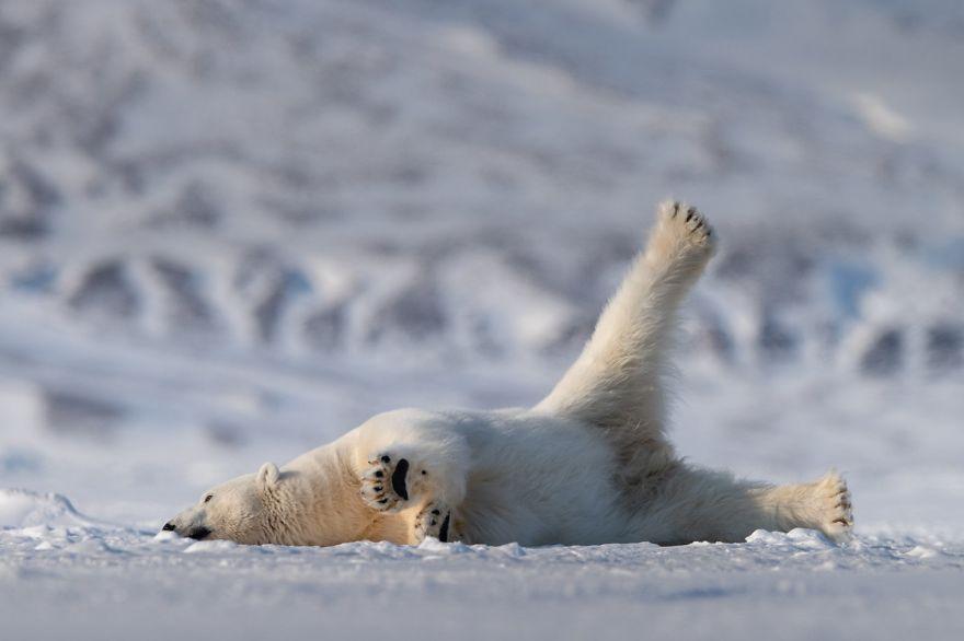 Comedy Wildlife Photography: Cele mai amuzante poze din salbaticie - Poza 12