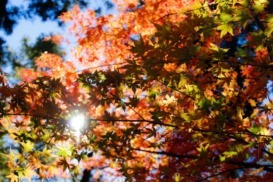 Cele mai frumoase peisaje de toamna, in imagini superbe - Poza 5