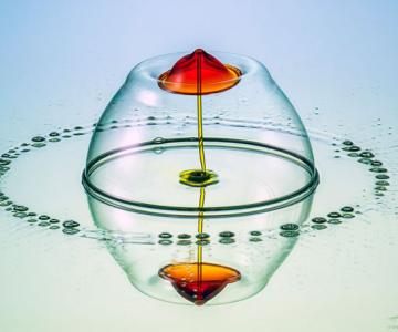 Culorile fascinante ale apei, la microscop