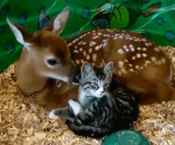 14 animatii cu animale adorabile: Cei mai buni prieteni