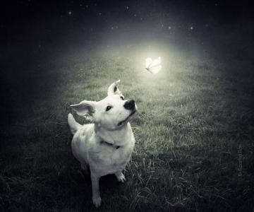 Photoshop pentru animale fara stapan, de Sarolta Ban