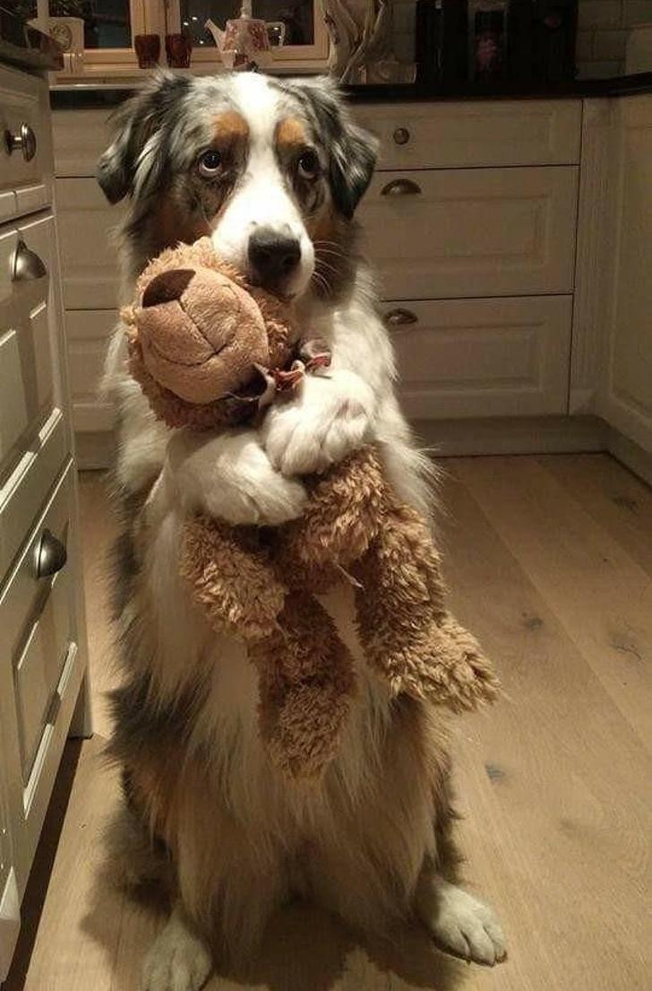 Cele mai adorabile animale, in cele mai bizare ipostaze - Poza 7