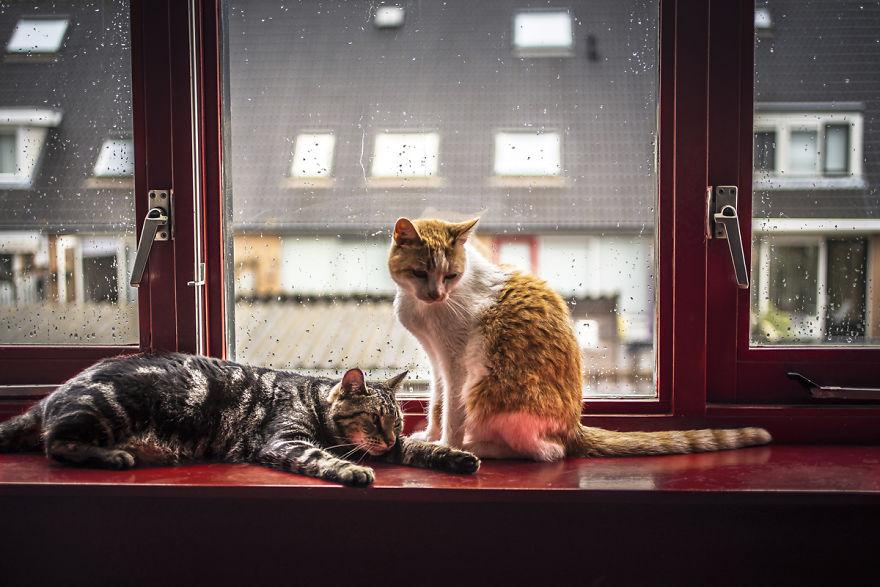Pisicile care adora ploaia - Poza 3