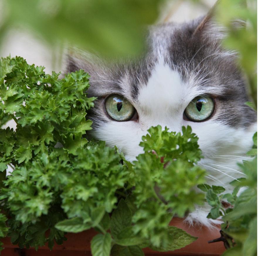 Cele mai frumoase poze cu pisici - Poza 6