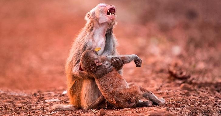 Intensitatrea emotiilor in poze impresionante - Poza 4