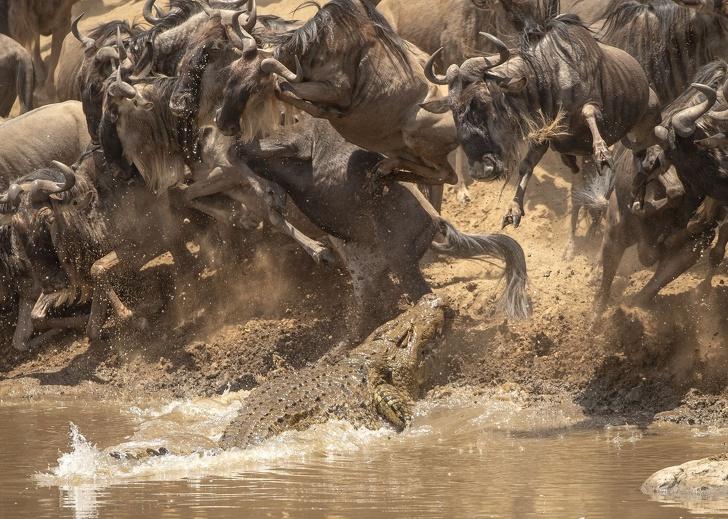 National Geographic: Cele mai bune poze ale anului 2018 - Poza 8