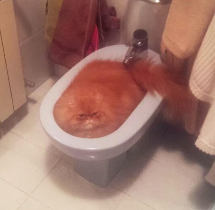 Pisicile chiar au simtul umorului. Avem dovada! - Poza 18