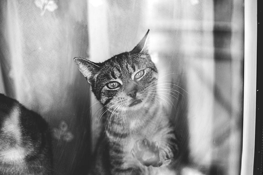 Pisici la fereastra, in poze alb-negru - Poza 11