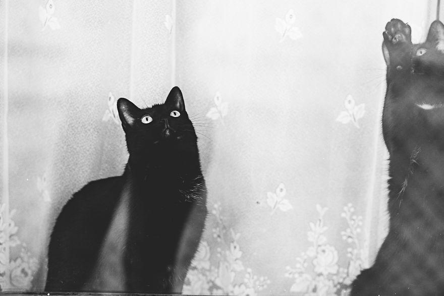 Pisici la fereastra, in poze alb-negru - Poza 5