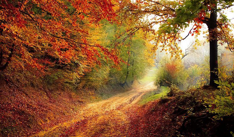 Cele mai frumoase peisaje de toamna, in imagini superbe - Poza 2