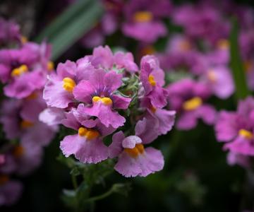 Cele mai frumoase citate despre flori