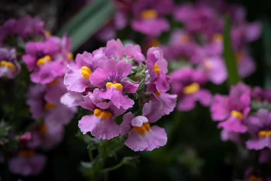 Cele mai frumoase citate despre flori - Poza 1