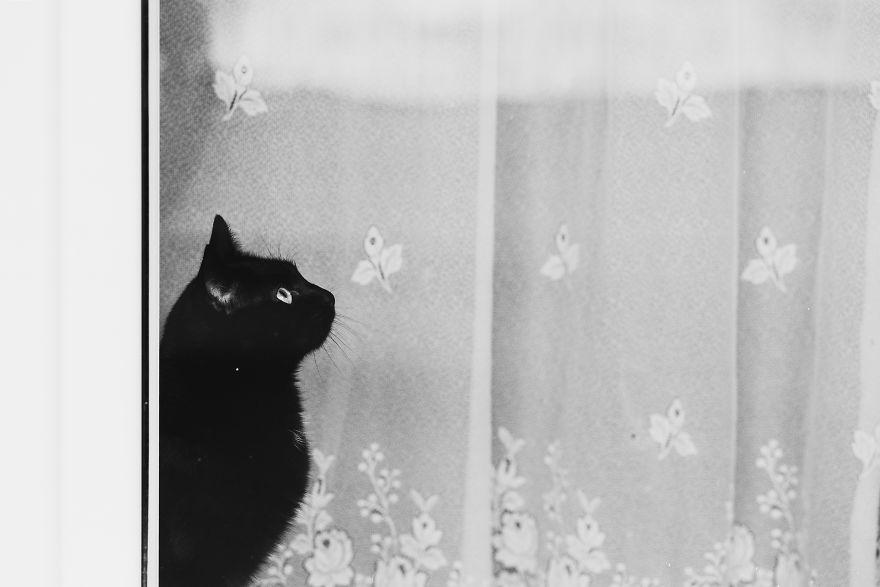 Pisici la fereastra, in poze alb-negru - Poza 19