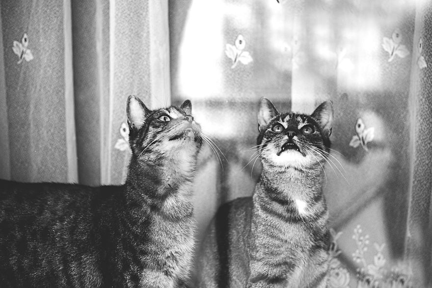 Pisici la fereastra, in poze alb-negru - Poza 3