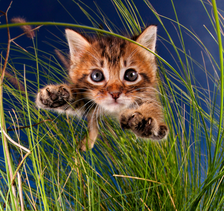 Pisicute adorabile surprinse in aer - Poza 3