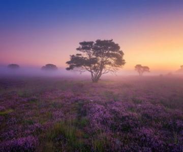 Splendori de august, in poze superbe