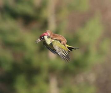 10 Poze cu animale care par ireale