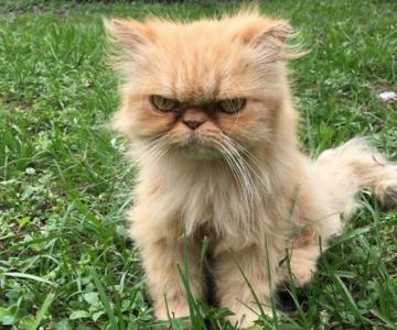 Garfield, cel mai simpatic motan incruntat