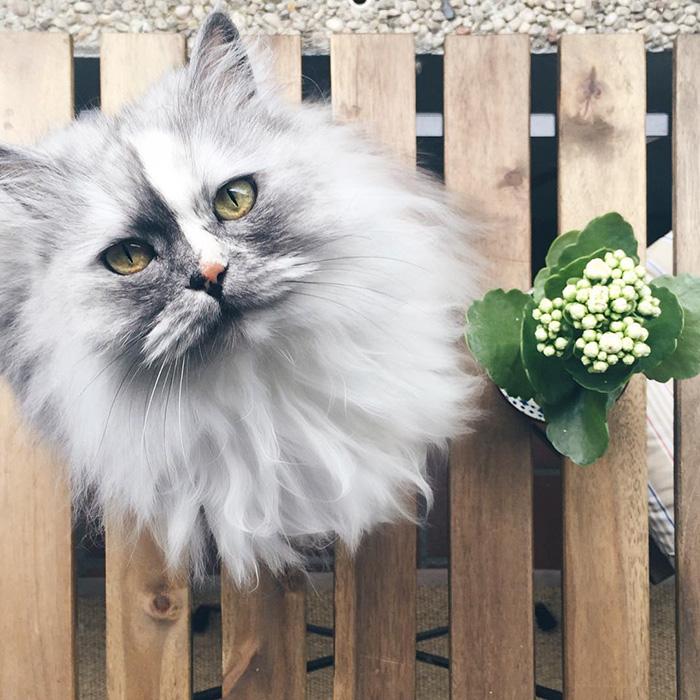 10+ Pisici superbe, in poze de colectie - Poza 14