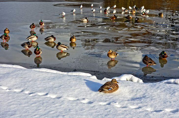 Cele mai frumoase ipostaze ale iernii, in poze sublime - Poza 10