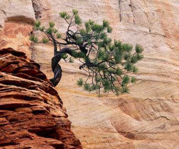 20 de fotografii cu natura de William Neill