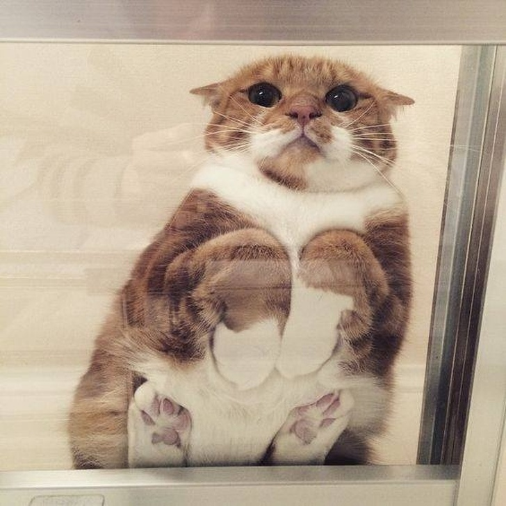Dovezi ca pisicile sunt adorabile din orice unghi le-am privi - Poza 8