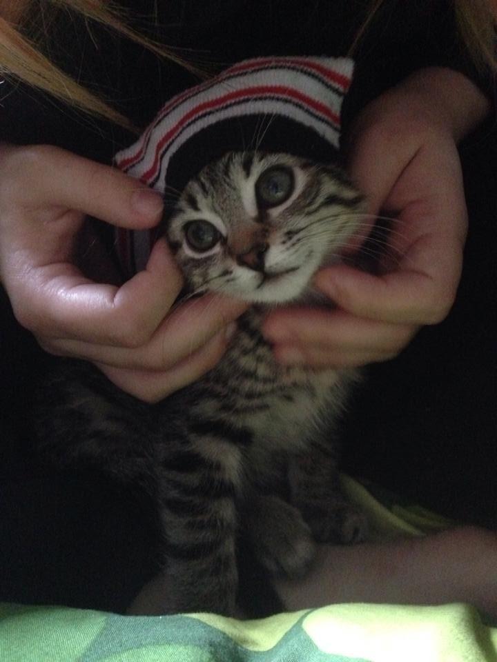 Cele mai dragute pisici din lume, in poze adorabile - Poza 15