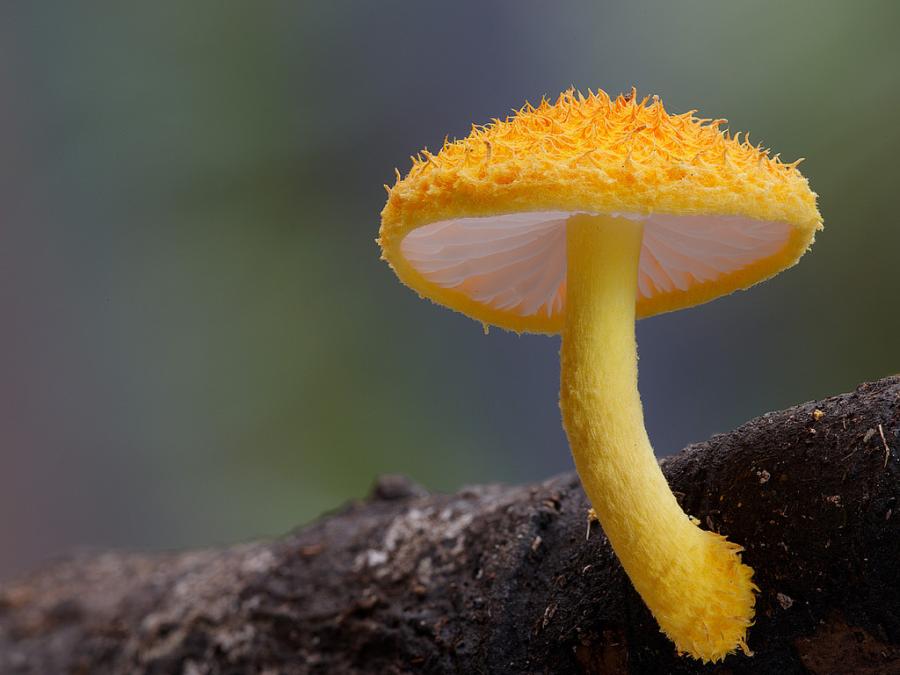 10+ Ciuperci fantastice, in poze ireal de frumoase - Poza 1