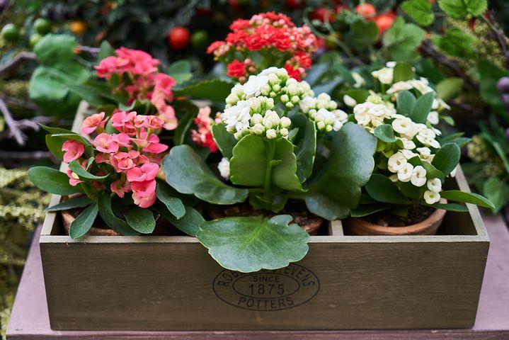 Gingasia florilor de primavara in poze superbe - Poza 16