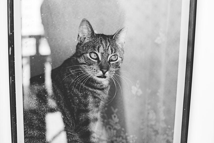 Pisici la fereastra, in poze alb-negru - Poza 8