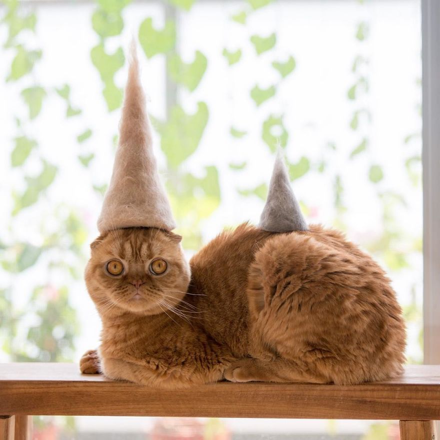Cochete si haioase: Pisici cu palarii blanoase - Poza 4