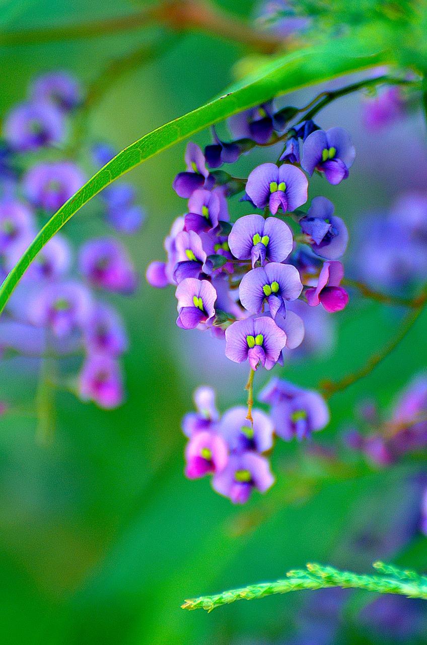 Cele mai frumoase flori din lume, intr-un pictorial de exceptie - Poza 23