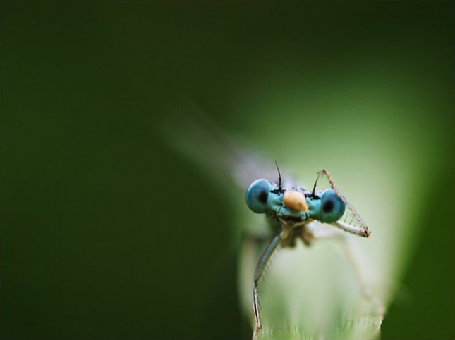 Natura la control, in 40 de poze - Poza 22