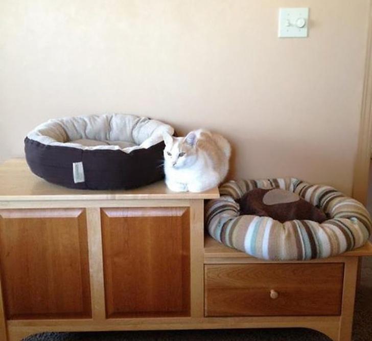 Pisicile chiar au simtul umorului. Avem dovada! - Poza 10