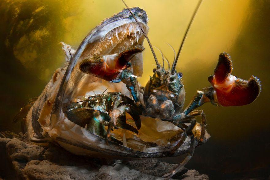 Fotografii superbe din uimitoarea lume subacvatica - Poza 20