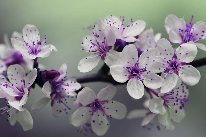Splendoarea copacilor infloriti in poze superbe - Poza 7