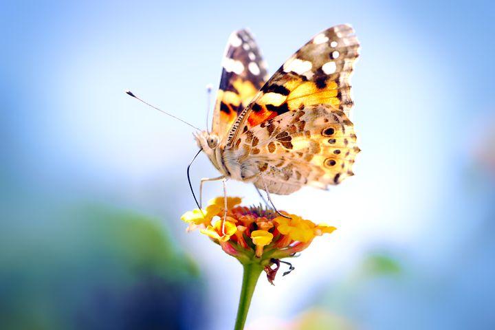Cei mai frumosi fluturi din lume, in poze spectaculoase - Poza 22