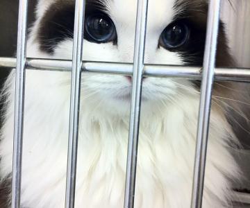 10+ Pisici superbe, in poze de colectie
